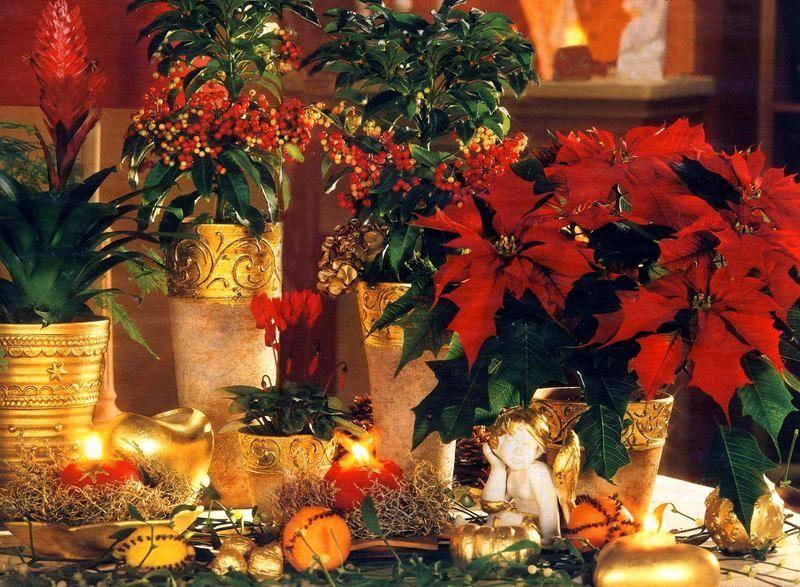 новогодние цветочные композиции молочай красивейший