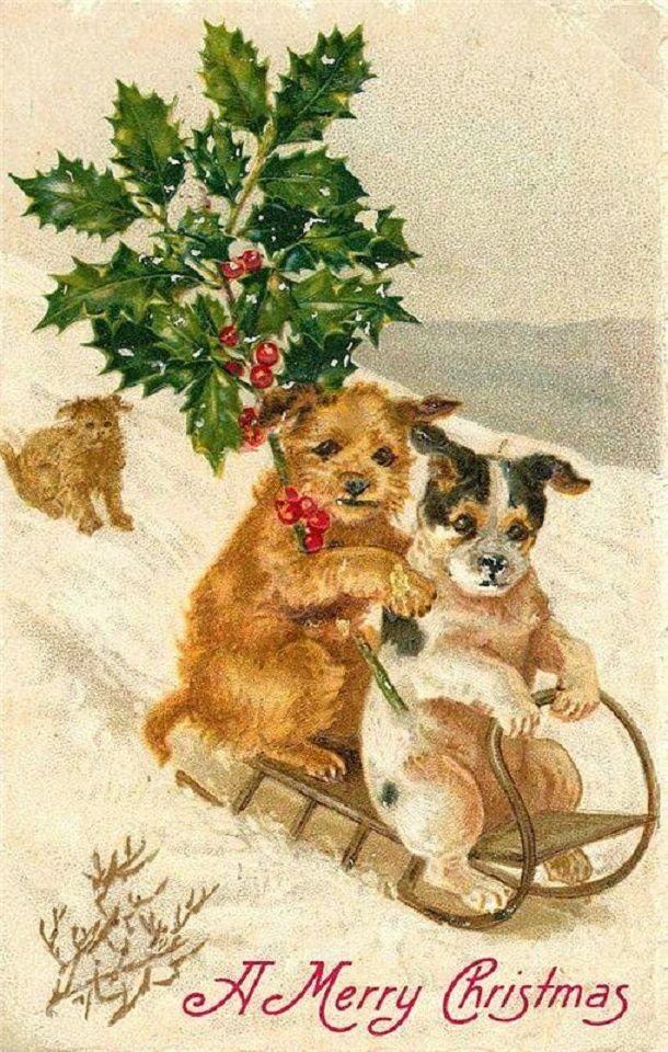 Открытку прикол, старые открытки с собакой