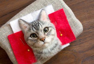 игрушка котик фото