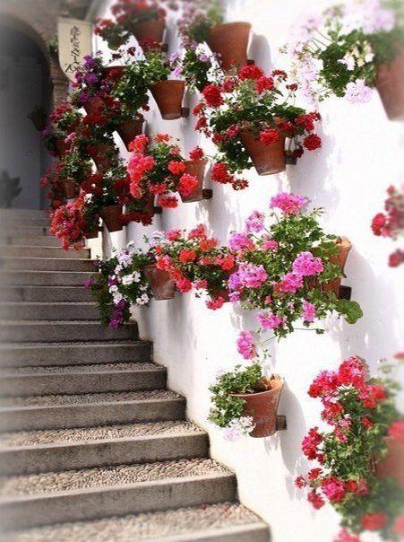Стена и кашпо с цветами