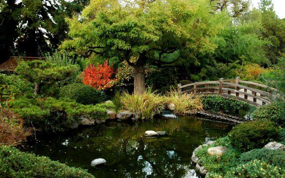 Декоративный пруд в японском стиле