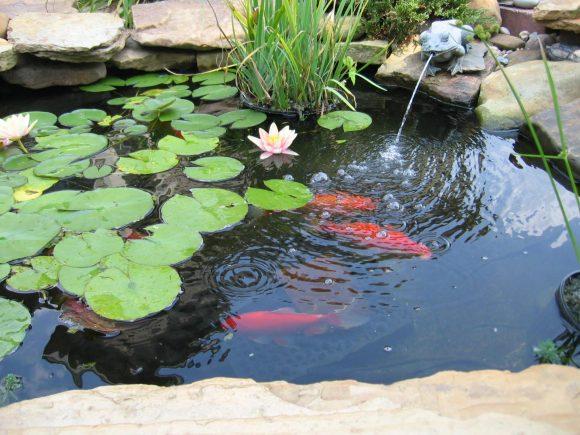 Маленький пруд с рыбками и кувшинками