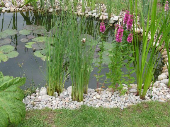 Осока и цветы на берегу прудика