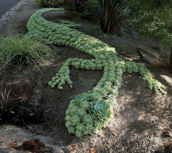 Зелёная композиция из каменной розы