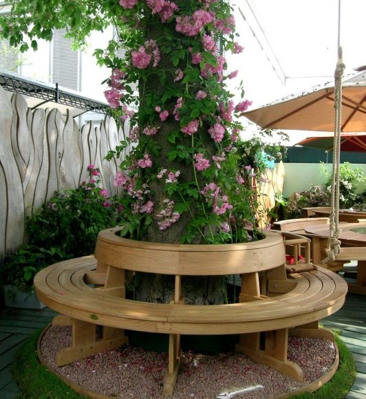 Плетистая роза вокруг живого дерева