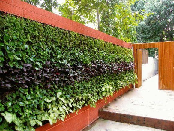 Вертикальное озеленение дачного забора