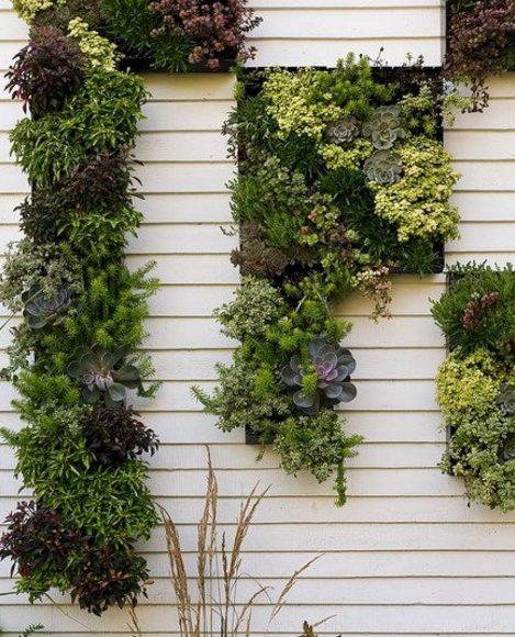 Вертикальные растительные композиции на дачном заборе