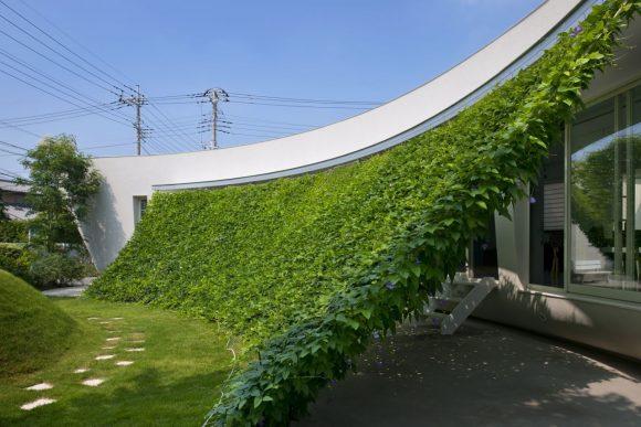 Зелёный навес над входом в загородный коттедж