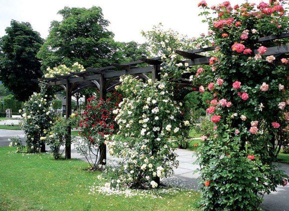 Живописная арка с плетистыми розами
